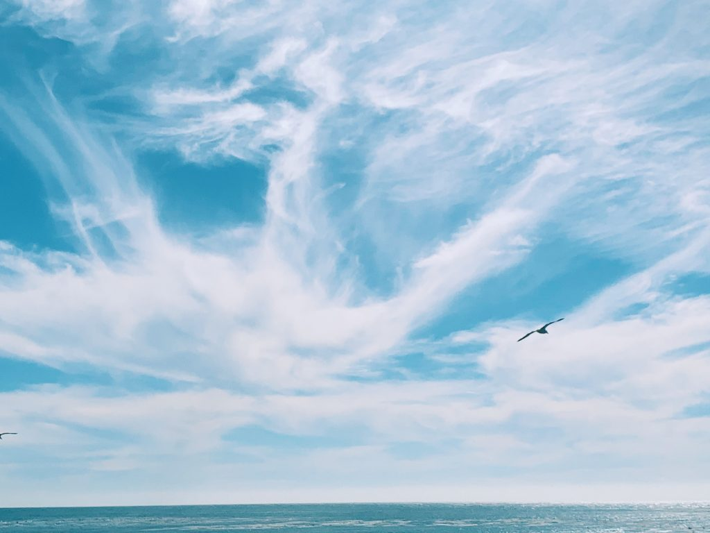 image of blue sky over water with a seagull flying